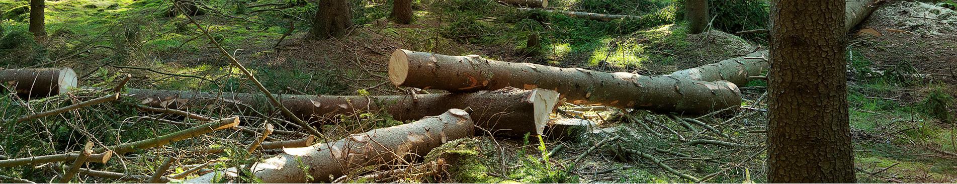 Fejszék- és erdészeti szerszámok